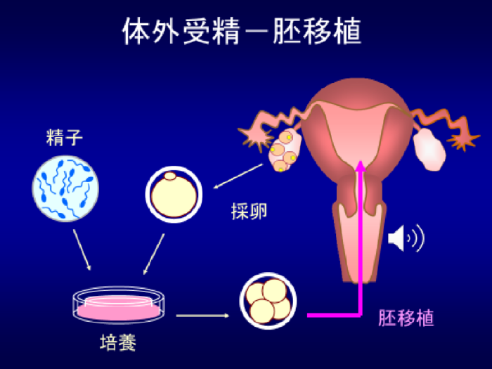 fertilization_pic_view_01